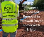 Japanese knotweed removal, control, identification, surveys & treatment in Cornwall, Devon, Bristol & Somerset, UK.